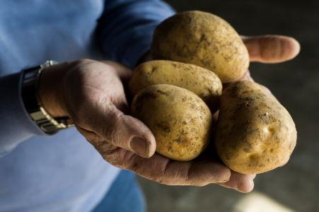 lescieux-jeanpauldevulder-pommesdeterre-dept08-21-website