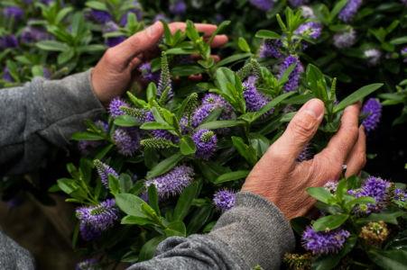 oasisfleurs-philippeveisse-fleurs-dept51-09-website